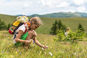 Naturerlebnisse am Falkert auf einer Sommerblumenwiese